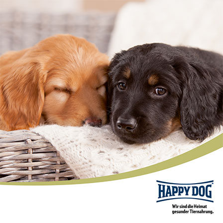 happy dog und das selfie gewinnspiel mit bonita und ihren welpen hovawart zucht. Black Bedroom Furniture Sets. Home Design Ideas