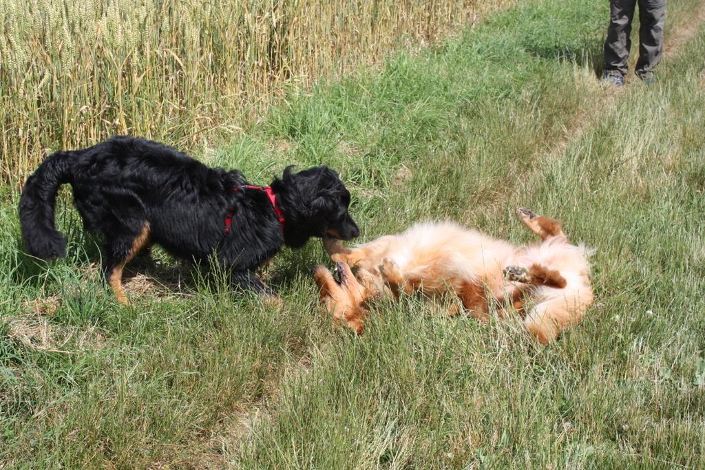 Bella tobt mit Klein Bonnie